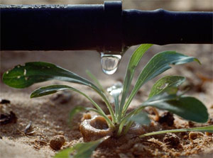 a system installed by our Haltom City drip irrigation specialists